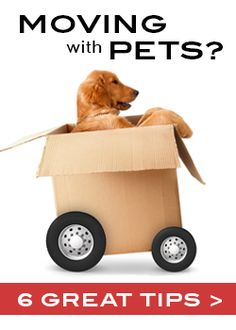 Six Moving Tips When Relocating With Pets -- what a great resource! #moving #pets #MovingTips