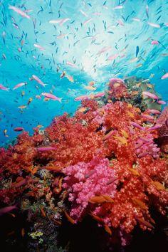 Snorkelling in Fiji