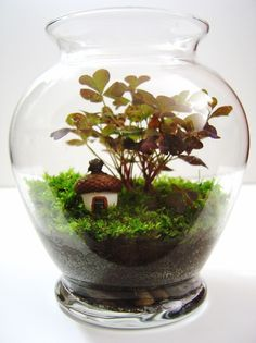 Mini terrarium with tiny hand-made acorn house.