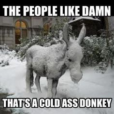 thriftshop, funni stuff, thrift shopping, laugh, shops, giggl, donkeys, people, cold ass