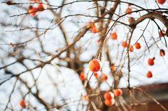 The season of color.