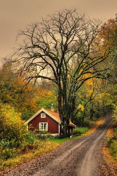 cabin, country roads, tree, back roads, place