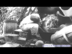 ▶ HAWAIIAN HISTORY ON FILM - 1917 HAWAIIANS MAKING POI - YouTube
