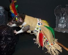 OMGWTFBBQ: Costumes For Your Pet Rat