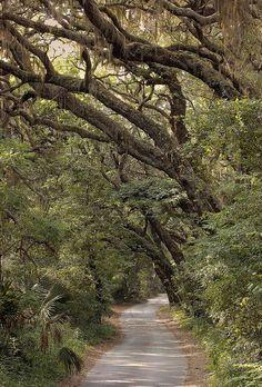 Fort George Road on Fort George Island in Jacksonville, Florida.