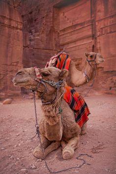 Riding a Camel, bucketlist