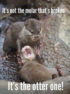 Dental Humor - Got laughs? - Community - Google+