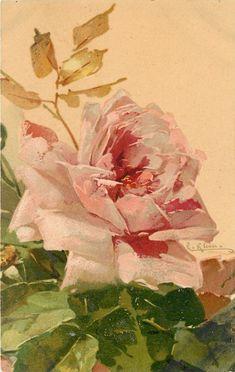Single pink rose ~ Catherine Klein ~1906