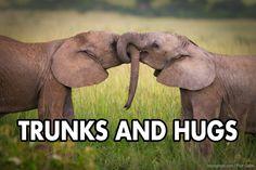 Elephant trunk hugs!
