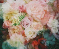 Blur Flowers
