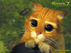 Please sir...I am a poor little kitty cat....
