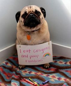 "This is just hysterical!  Reminds me of ""Pug Henry"""