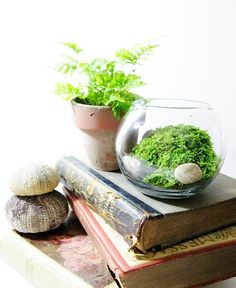 What proper classroom would be complete without an arrangement of terrariums, plants, books and other finds?!