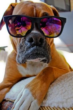 cool doggie