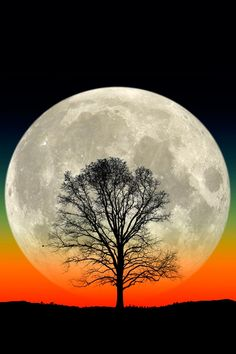a full moon rises behind the silhouette of a lone tree in this composite photo by Larry Landolfi