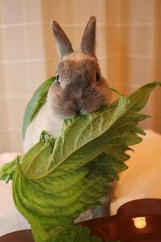 Bunny puts on disguise to get closer to the refrigerator