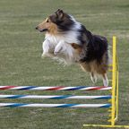 A few online tutorials of how to make your own agility equipment!