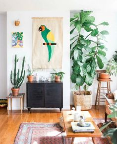 A fiddle leaf fig in