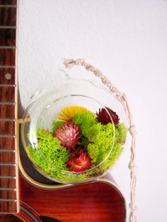 Funky airplant terrariums
