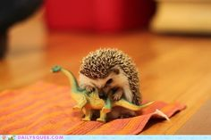 There's so much about this picture I love.  Hedgehog.  Dinosaur.  Hedgehog AND dinosaur...