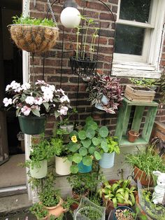 they hang on a trellis...great for a small apartment porch.