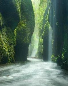 Rainforest Canyon, Oregon.