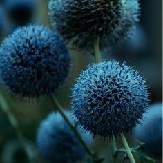 #1 Monaco Blue Spring Color Trend 2013