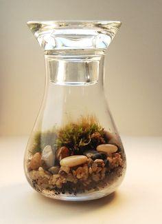 DIY moss terrarium <3 .... //
