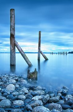 ~~Bainbridge Island, WA #2 by eric.felix~~  picked up some of the most beautiful driftwood on our visit  :)