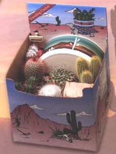 Cactus Planting Kit - This kit contain 5 cacti, an 8″ Southwestern designed ceramic planter, soil, decorative stones, and an Arizona sign. Everything you need for a small cactus desk garden. Now you can own a piece of the American Southwest! Desert Canyon Gifts presents a selection of Cactus Growing Kits. Most cactus planting kits come complete with cacti, the right type of soil, decorative pebbles, planter, and a unique Arizona sign. $42.95
