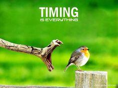 De todas las competencias que posee un CEO, el manejo del timing es la más difícil de adquirir y la que más destaca su destreza.