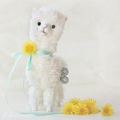 Alpaca.  Cute!