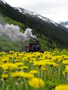 When we (if ever) are in Skagway Alaska we are going to ride on the WP & YR Railway.