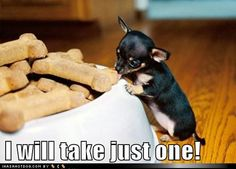 funny dog pictures - I will take just one!