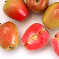 Mountain Rose Apples