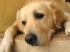 Canine Phobias and Anxieties