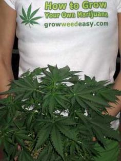 The GrowWeedEasy.com website has several free tutorials and resources to help you get started growing today!