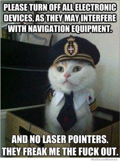bird, laser pointer, glass doors, kitty cats, kitten, funni, pilot, pet humor, cat memes