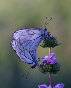 Purple butterfly nature insects Bokeh photography