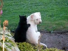 O gato massagista   Veja mais em: http://www.jacaesta.com/o-gato-massagista/