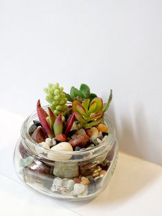 Mason Jar with Succulent Plants 8 oz by 2CraftyCougs on Etsy