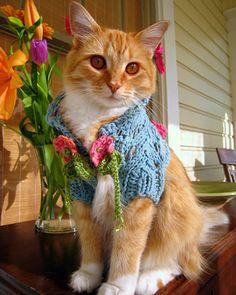 crocheting cat !