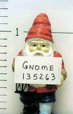 Gnome Police: French police arrest serial garden gnome thief. Police in Bretagne have arrested a 53-year-old man suspected of the thefts of 170 garden gnomes. However, it is proving difficult to return the gnomes to their real owners - the thief painted them different colours, making identification tricky.