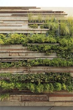 "three-dimensional green wall at the Zentro Commercial and Office Building outside Lima, Peru, designed by Veronica Crousse of the Buenos Aires-based practice Gonzalez Moix Arquitectura as a ""mural of recycled wooden planks fitted together like a haphazard puzzle with several kinds of plant species sprouting from the cracks and seams."""