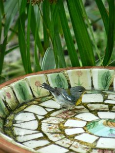 Northern Parula warbler visiting a Florida birdbath
