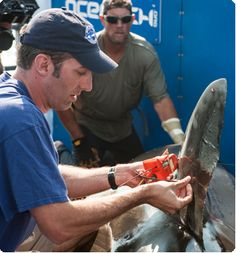 Forget Shark Week. Shark Science at Mote Marine Laboratory is way cooler.