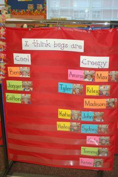 kindergarten graphs, preschool graphs charts, question of the day preschool, bugs kindergarten, preschool attendance chart, pocket charts, preschool idea, insect, graphs for preschool