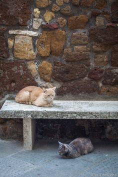 Kitties in Tuscany