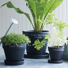 Chalkboard planter DIY idea for indoor herb garden