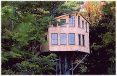 yes... it's a tree house!